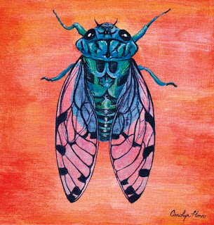 cicada scientific illustration
