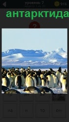 800 слов в Антарктиде много пингвинов 7 уровень