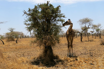 50 Fascinating Facts about Tanzania