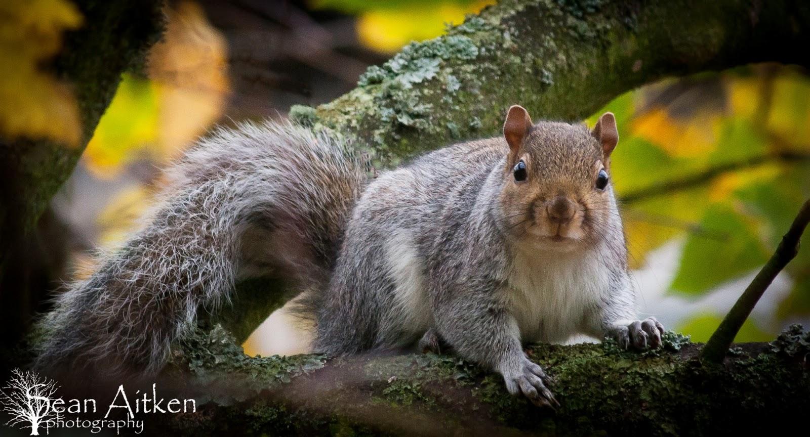 Beautiful Wallpapers Squirrels Wallpaper-9786