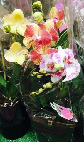 Trader Joe's Orchids Price : trader, joe's, orchids, price, 11:42, Style:, Orchid, Trader, Joe's!!!