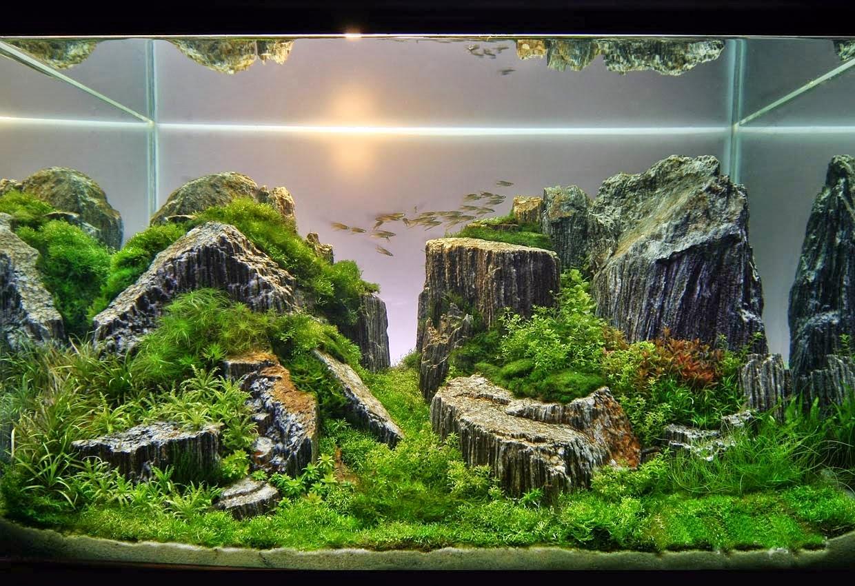 Jenis - Jenis Tema Pada Aquascape - Dunia Akuarium