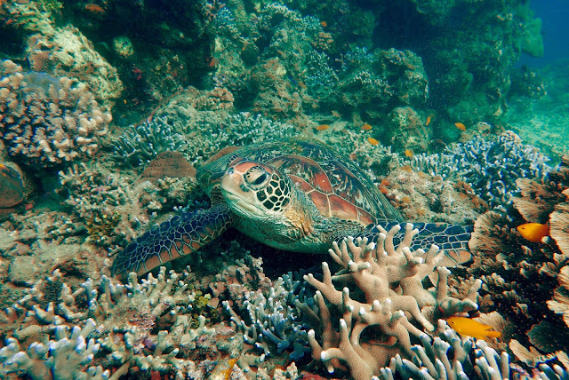 Scuba diving, underwater photography, padi, parity, paparazsea, learn diving in the Philippines