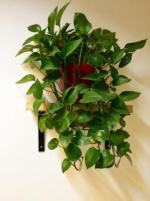 Feng Shui indoor plant