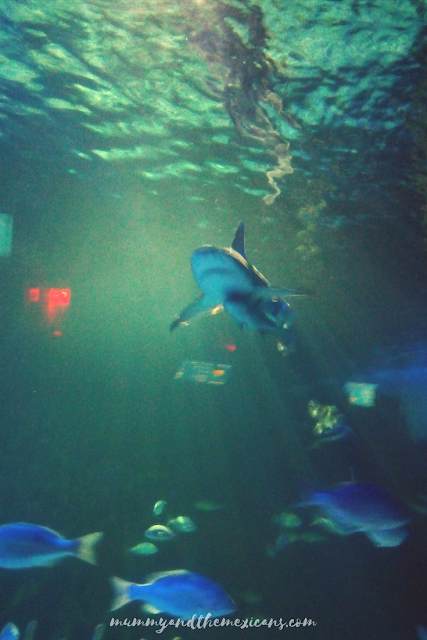 Mexico City Aquarium