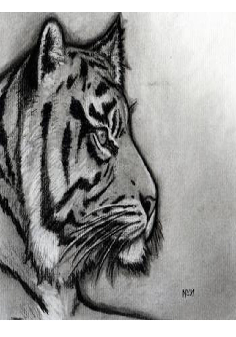 Tiger Side View Drawing