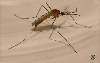 Malaria w Europie.