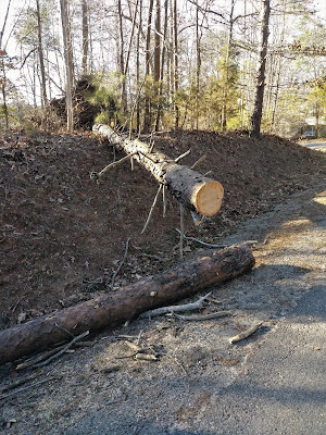 photo of just one of the trees that fell during winter storm Riley
