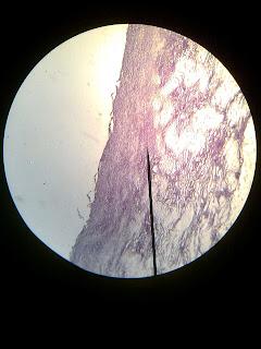 Je suis alia aqilah, et vous? =): Histology Slide
