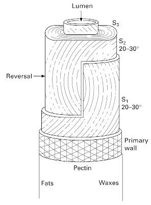 Figure 2 Morphology of Cotton Fibre