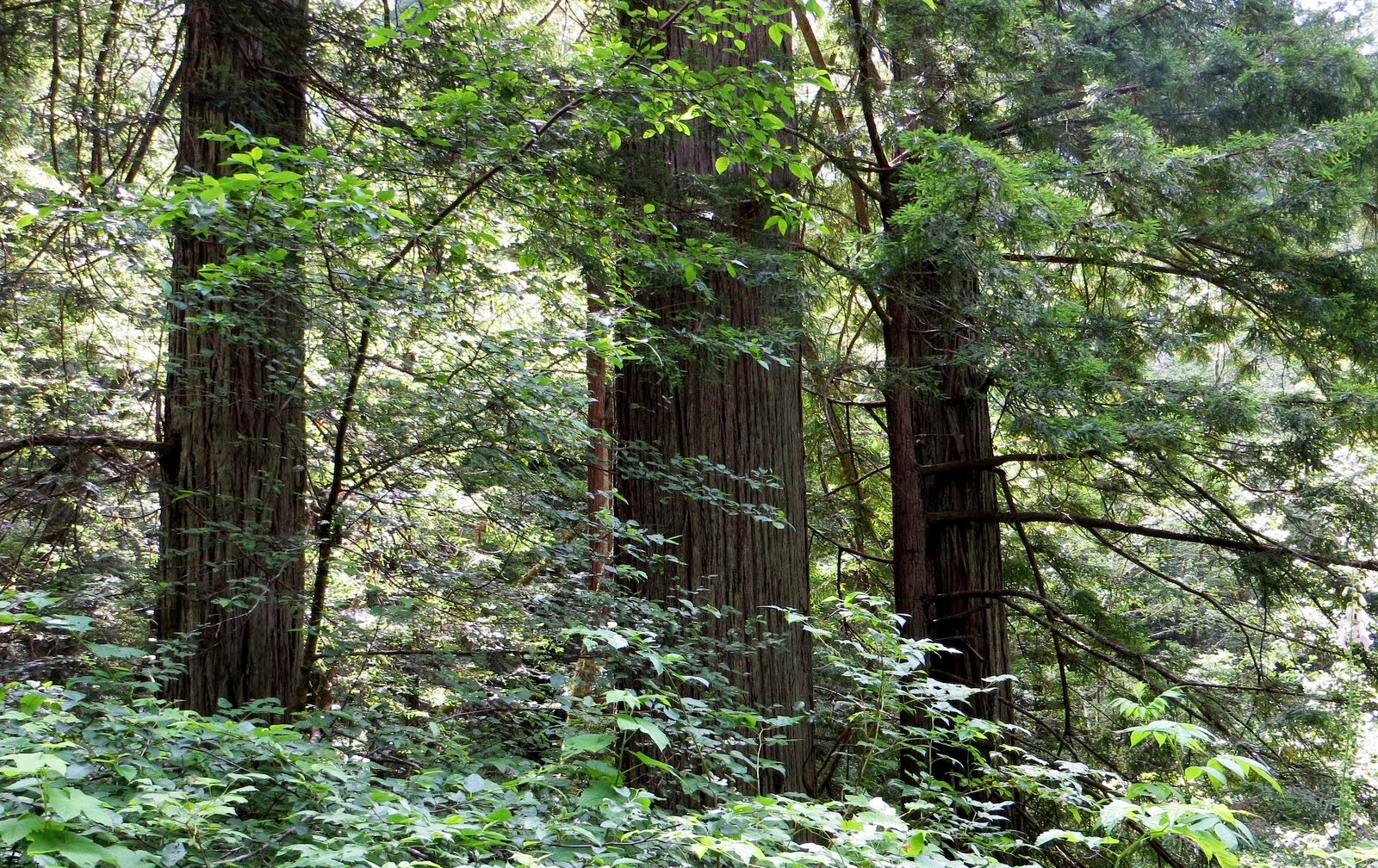 Candy N John Rv 2013 July Giant Redwood National Park