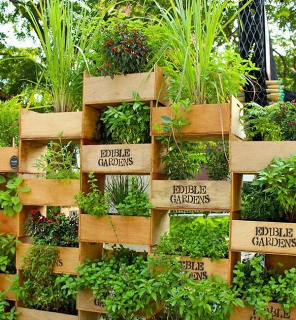 Benefits And Advantages of Vertical Gardens 8