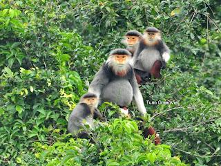 Discover Son Tra Monkey Mountain- an Interesting Trip