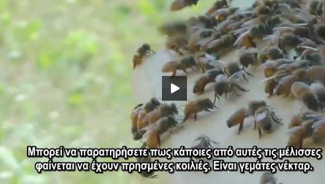 Το μέλι και ο τρύγος του video