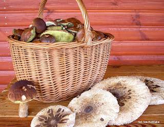 koszyk na grzyby, grzybobranie, idzemy na grzyby, prosto z lasu, zbieranie grzybow, las