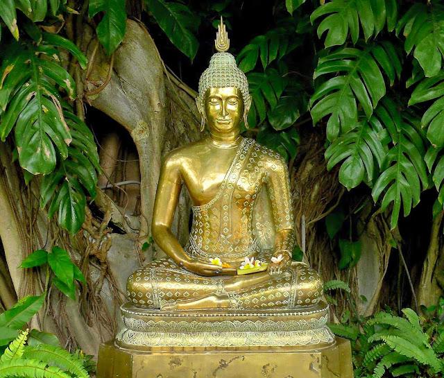 Đạo Phật Nguyên Thủy - Kinh Trung Bộ - 30. Tiểu kinh Thí dụ lõi cây