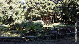 jardim botanico palermo guia portugues bacia - Dez razões para ver e se apaixonar por Palermo