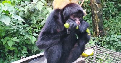 Uno de los monos del proyecto de Bolivia