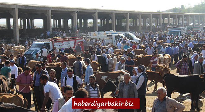 Diyarbakır'da kurbanlık satışlarında hareketlilik