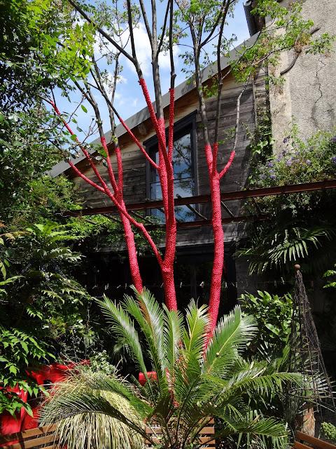 (07) Le jardin de Bésignoles - Privas - Page 2 DSC07739