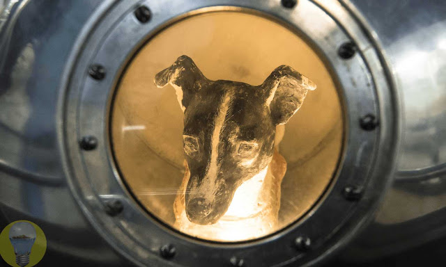 What Happened to the First Dog in Space?