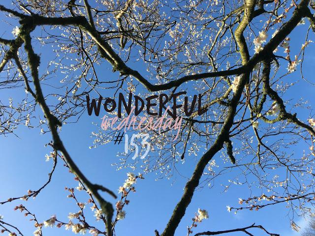 Wonderful Wednesday #153