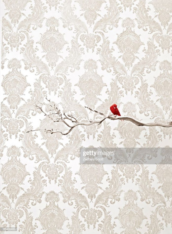 Red Bird On Branch Against Flocked Wallpaper Stock Photo Getty