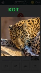 800 слов леопард очень похожий на кота лежит 7 уровень