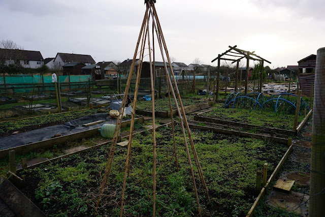 the plot after 3 months of winter neglect - Carrie Gault