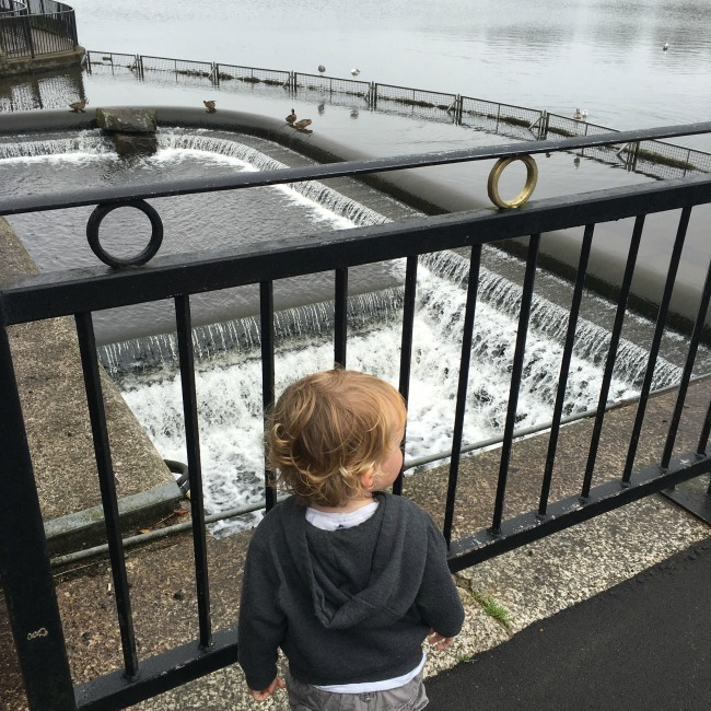 toddler-watching-water-go-down-lake-overflow-at-roath-park