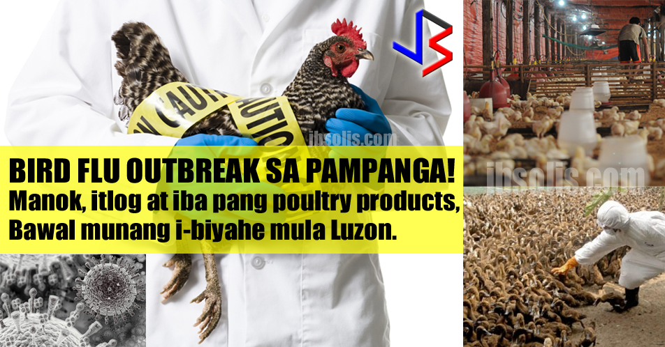 "The governor of Pampanga province has declared a state of calamity in the entire province due to a bird flu outbreak in one of its towns, the first in the Philippines. This is after Agriculture Secretary Emmanuel Piñol confirmed that a strain of the avian influenza virus was confirmed in San Luis town, affecting mostly layer poultry farms which produce table eggs.  Around 37,000 fowls, mostly quail and ducks, have died of the Avian Influenza Type A Subtype H5 in recent months. Six farms in Barangays San Carlos and Santa Rita in San Luis, Pampanga were affected by the outbreak.  3 farms suffered a 100 percent death rate of its fowls, while overall mortality rate in the affected area was placed at 34.5 percent.  The Department of Agriculture (DA) has ordered a ban on the transport of poultry from Luzon to other parts of the country until further notice. Fowls and eggs from the controlled area are not allowed to be brought out. This is to ensure that the outbreak will be controlled.  Twelve quarantine teams are guarding exit routes with power sprays to disinfect vehicles coming out of the quarantine area. Ninety quarantine officers have been sent to the area to enforce quarantine measures with assistance from police.  The ongoing crisis may affect the supply of eggs in the market, but not chicken.  Investigation of the outbreak began last Aug. 4, Piñol said. But deaths of quail and ducks began on the last week of April, followed by reported deaths of chickens in May.  The Agriculture Department has yet to confirm the source of the outbreak. The DA is looking into two major angles for the infection: contact with migratory birds and smuggling in of Peking duck.  Research Institute for Tropical Medicine Assistant Director Celia Carlos said tests confirmed that the virus found in the outbreak area did not have the H5N1 strain. Samples will be sent to Australia to confirm its exact strain and results are expected in two weeks.  Meanwhile, around 200,000 fowls within the 1-km radius quarantine area of San Luis town will be culled, burned and buried in the next 3 days to control the outbreak.  Another 7-km radius controlled area has also been declared. The quarantine will last for a period of 90 days.  The farmers whose fowls will be culled shall be compensated by the government. Loan programs will also be made available to poultry farmers affected by the outbreak. ""We assured them that government would compensate and, initially, it was agreed that we would compensate at a rate of P80 per head,"" Sec. Piñol said.  Avian influenza is a viral infection that spreads among birds but can infect humans as well. As of Friday, authorities have not received any report of human infection.  According to the World Health Organization (WHO), human infection is primarily acquired through direct contact with infected animals. They also clarified that there is no evidence that the avian flu can be acquired by eating properly cooked eggs or poultry.  The infection may cause diseases such as mild conjunctivitis or swelling of the eyes, severe pneumonia and even death. Interaction with infected people does not result in ""efficient transmission"" of the flu.  Health Secretary Paulyn Ubial said the outbreak is still under the DA's investigation and advised the public to take precautionary measures against the flu. ""Do not go near wild birds or go to farms with fowls! If you have flu symptoms that last longer than 3 days or feel very weak, see a doctor or go to the nearest hospital for testing if its bird flu!"" she said."
