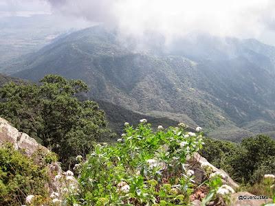 Vista desde Picacho de las Catarinas en el Cerro Grande de Ameca