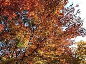 Notatnik Kaye Wiersze O Jesieni