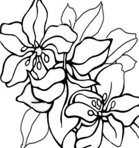 Colouring Pic Of Flowers