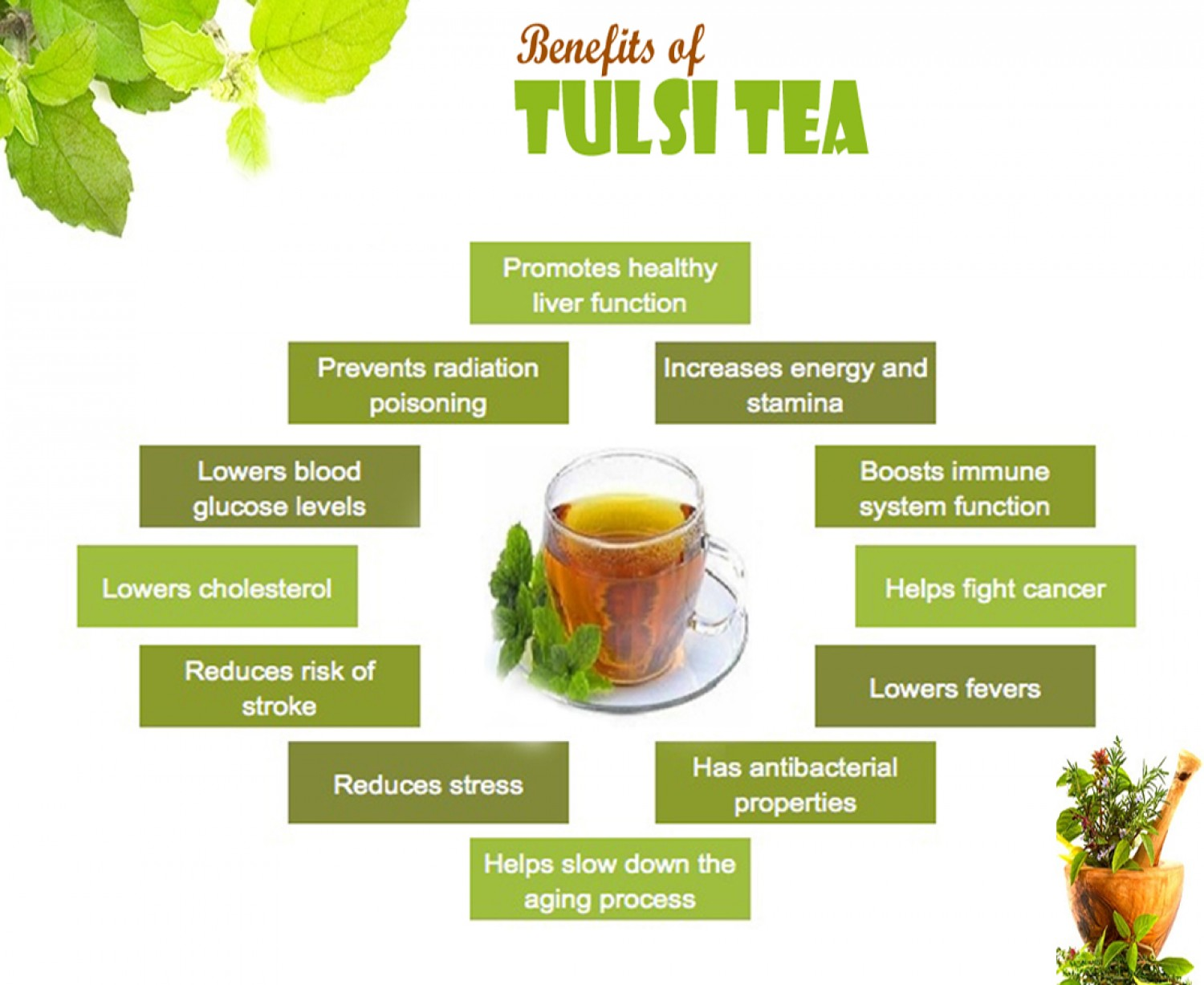 Herbal Tulsi Plant Its Benefit And Side Affect