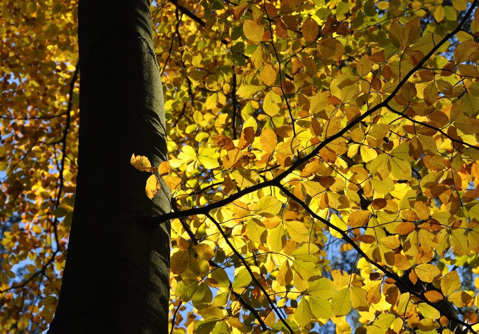 Jesienny las.