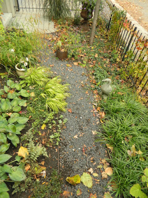 Cabbagetown Toronto Front Yard Fall Cleanup before by Paul Jung Gardening Services