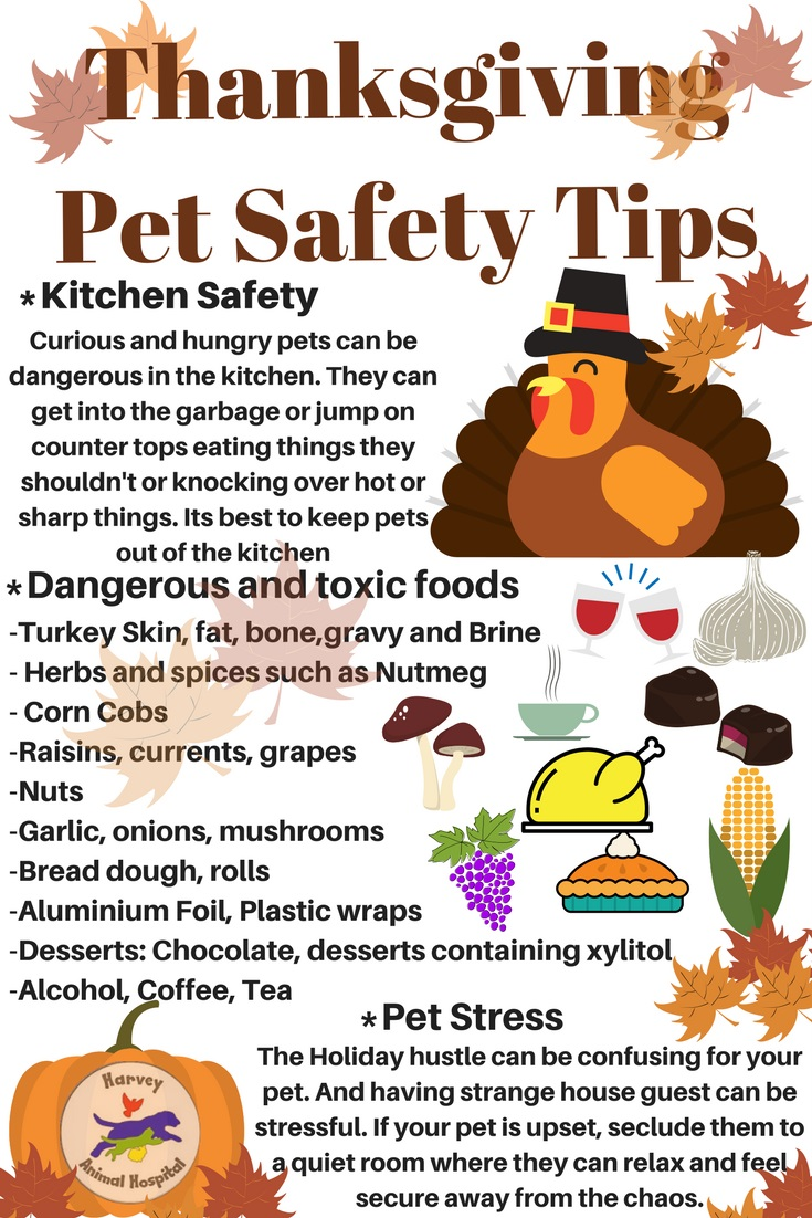 Thanksgiving Pet Safety Tips The Holidays Are Upon Us And Its Such A Fun Festive Time Of Year That Brings Friends Family Together To
