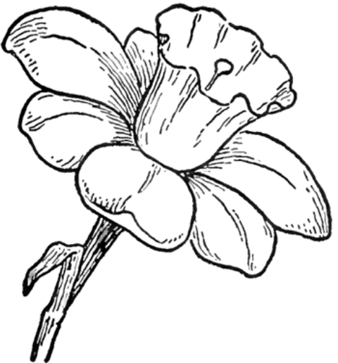 Pictures Of Flowers You Can Draw