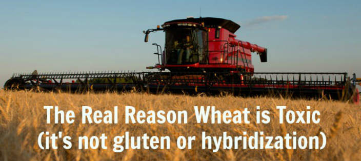 THIS is The Real Reason Wheat is Toxic (And It's NOT the