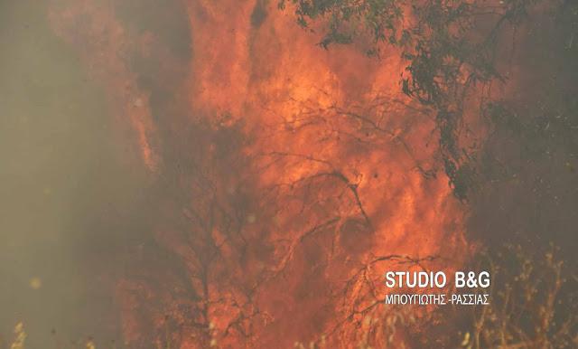 Πυρκαγιά στον Αχλαδόκαμπο