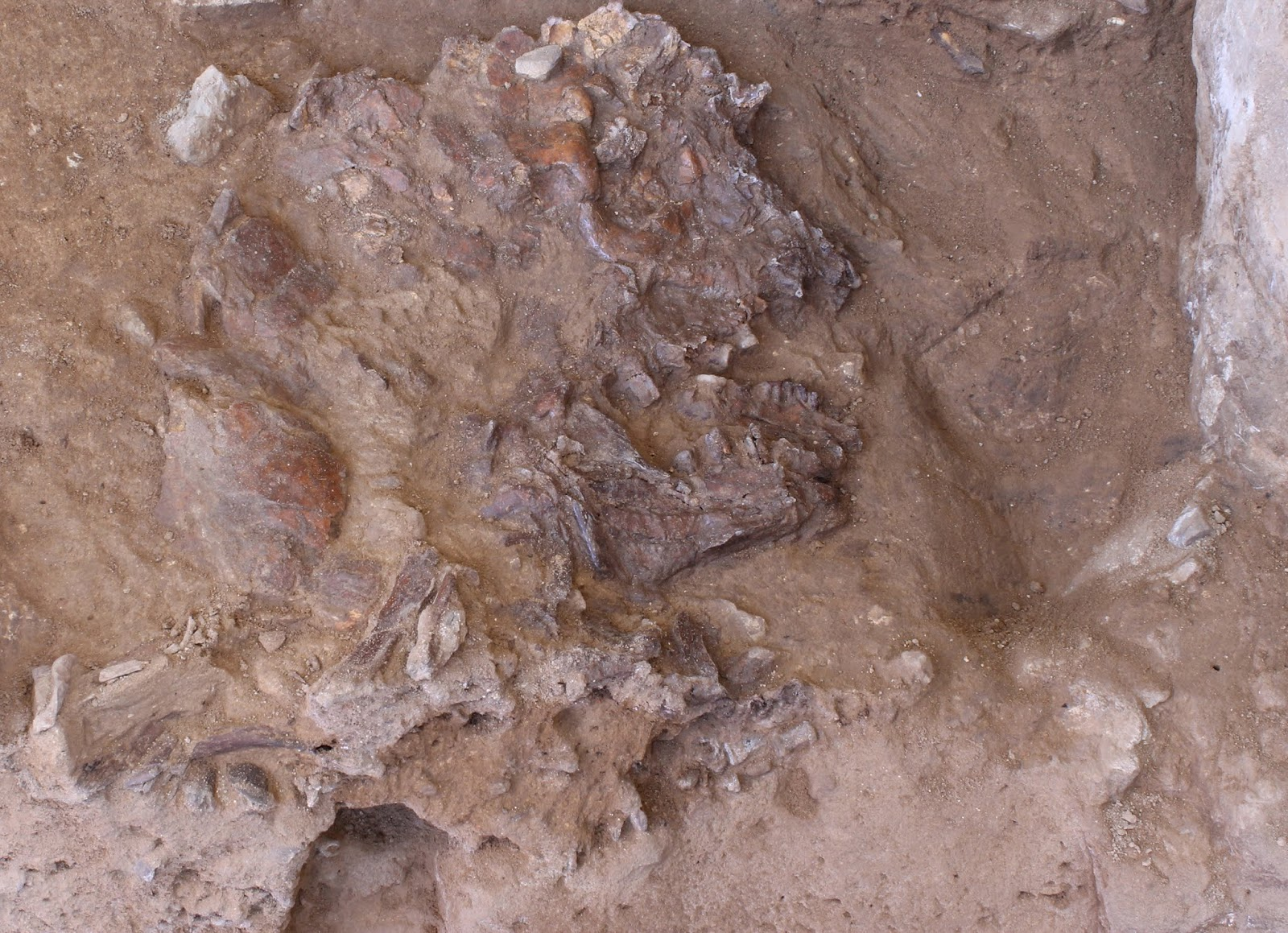 Nuevo esqueleto neandertal localizado en la cueva de Shanidar (Kurdistán Iraquí). Foto: Graeme Barker.