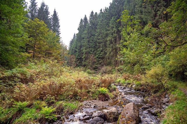 Drei-Täler-Tour  Themenwanderweg Bad Harzburg  Wandern im Harz  Baumwipfelpfad - Radauwasserfall - Eckertalsperre 08