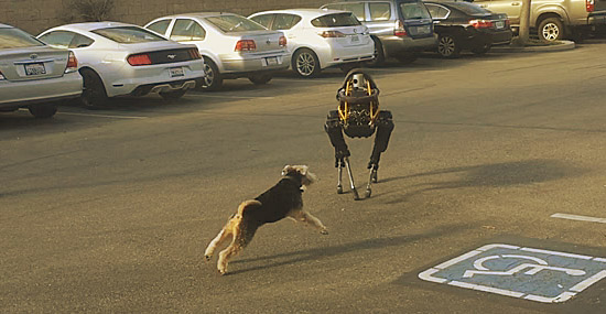 Robô cachorro gigante versus cachorrinho de verdade
