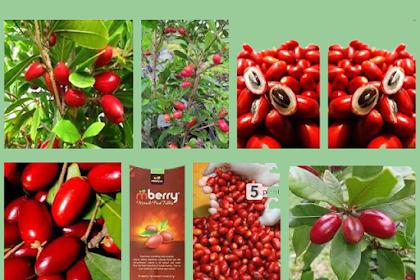 Ajaib 6 Khasiat Buah Miracle Fruit dan Efek Sampingnya