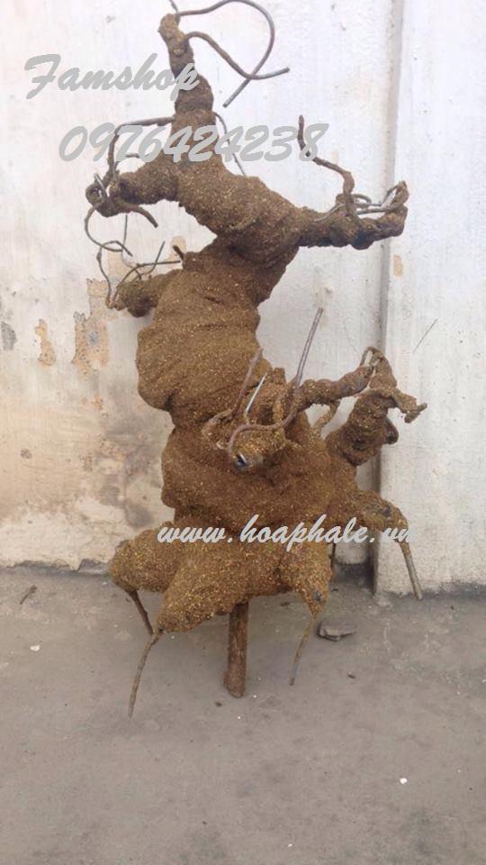 Goc bonsai mai dao the don tai Quynh Loi