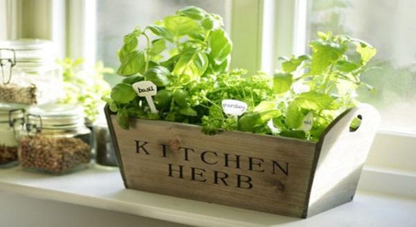 10 Tanaman Herba Yang Mudah Di Tanam Di Dapur Rumah, Sesuai Rumah Yang Tiada Laman Terutamanya Rumah Pangsa