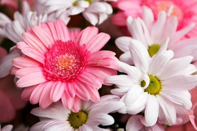 Photos Of Beautiful Flowers