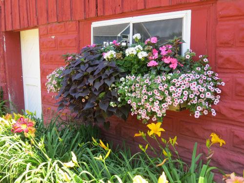 Mason County Garden Tour window planter