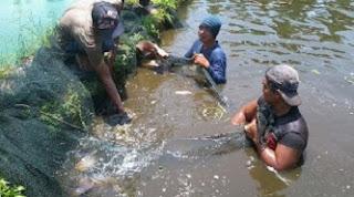 cara budidaya ikan gurame di kolam terpal dan beton,cara budidaya ikan gurame pdf,pembesaran  ikan gurame di kolam tanah,pembesaran  ikan gurame di kolam terpal,,